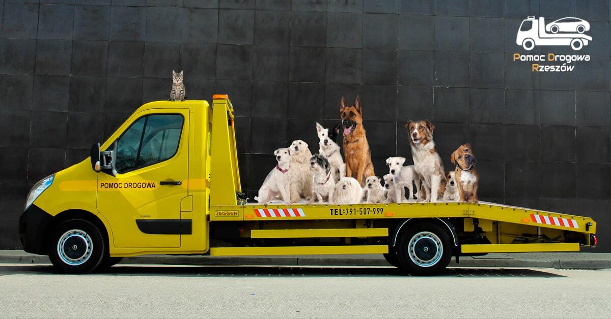 Pomoc drogowa? Może pomoc zwierzętom?